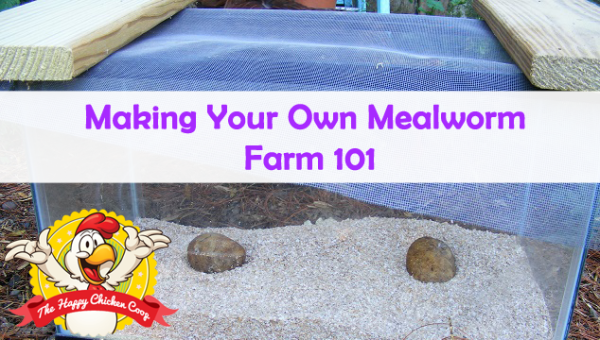 Making-Your-Own-Mealworm-Farm-101-Blog-Cover