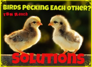 Pecking Solutions2