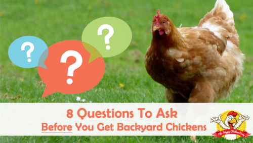 8-Questions-To-Ask-Yourself-Before-You-Get-Backyard-Chickens-Blog-Cover