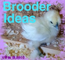 Brooder Ideas