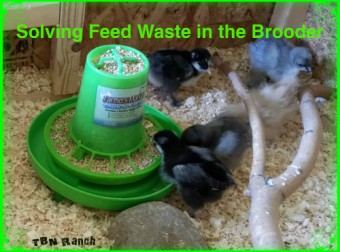 Feed Waste in the Brooder
