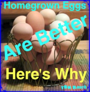 Homegrown eggs are better