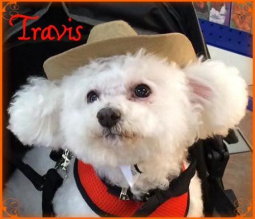 Travis 92015