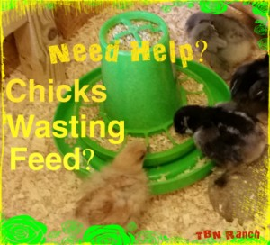 Chicks Wasting Feed