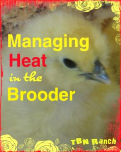 Managing Heat in the Brooder