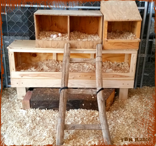 nest boxxes 101615