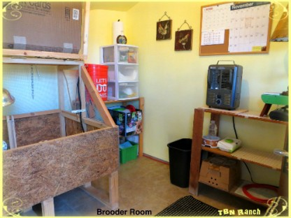 Brooder Room 11915
