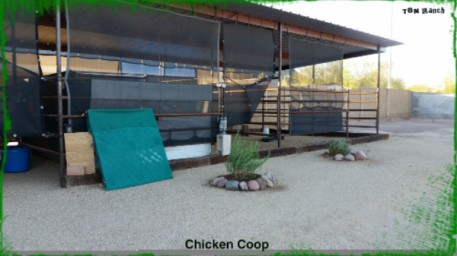 Chicken Shelter