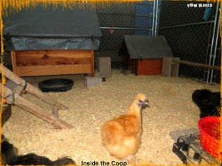 Inside the Coop 111015