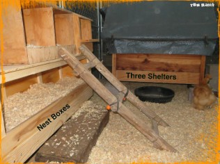 Nest Boxes & Shelters 111015