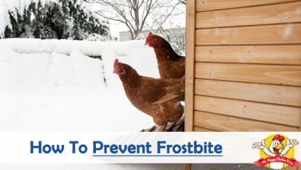How-To-Prevent-Frostbite-During-Winter-Blog-Cover