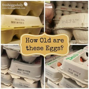 How-old-are-these-eggs