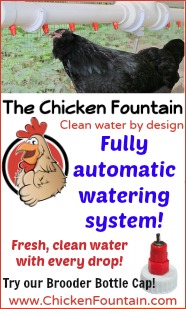 http://chickenfountain.com/