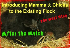 Introducing mamma and chicks album cover