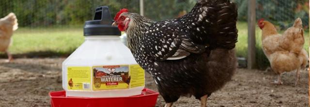 plastic-poultry-header