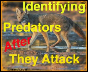 Identifying Predators 63016