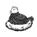 Broody hen in nest. Black and white vector stock illustration