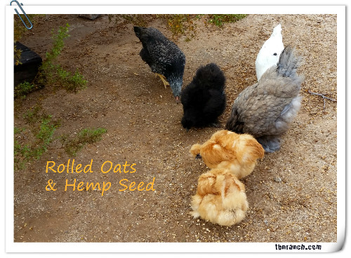 Rolled Oats & Flock 81916