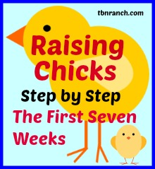 cover-raising-chicks