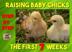 Raising Baby Chicks the First Seven Weeks
