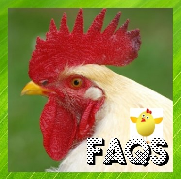 FAQ'S About Chickens