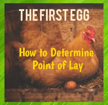 How to Determine the Point of Lay