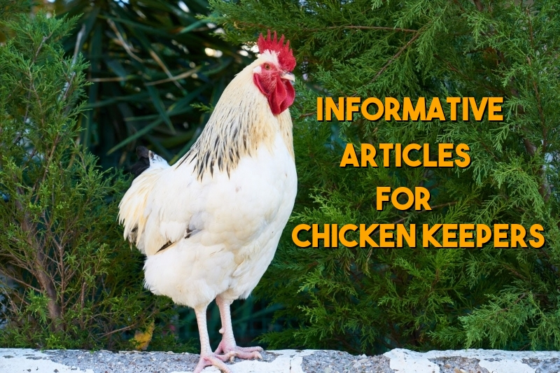 Articles for ChickenKeepers